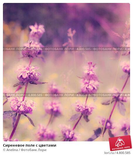 Цветы лиловых полей смотреть онлайн бесплатно в хорошем качестве