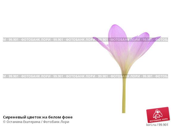 Купить «Сиреневый цветок на белом фоне», фото № 99901, снято 3 октября 2007 г. (c) Останина Екатерина / Фотобанк Лори
