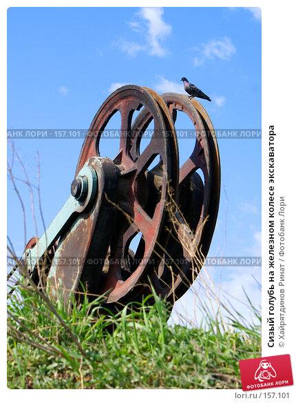 Сизый голубь на железном колесе экскаватора, фото № 157101, снято 20 мая 2007 г. (c) Хайрятдинов Ринат / Фотобанк Лори