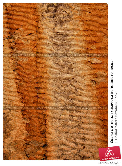 Скала с отпечатками окаменевшего песка, фото № 54629, снято 4 июля 2007 г. (c) Eleanor Wilks / Фотобанк Лори