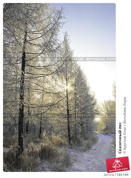 Сказочный лес, фото № 144149, снято 5 декабря 2007 г. (c) Круглов Олег / Фотобанк Лори