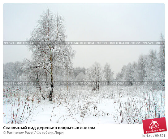 Сказочный вид деревьев покрытых снегом, фото № 99521, снято 15 февраля 2007 г. (c) Parmenov Pavel / Фотобанк Лори