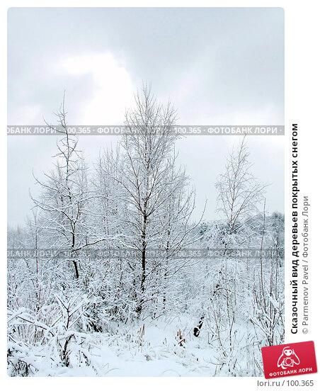 Сказочный вид деревьев покрытых снегом, фото № 100365, снято 15 февраля 2007 г. (c) Parmenov Pavel / Фотобанк Лори