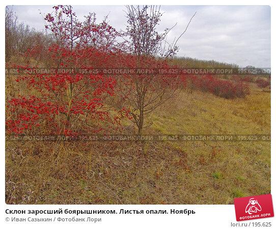 Склон заросший боярышником. Листья опали. Ноябрь, фото № 195625, снято 13 ноября 2004 г. (c) Иван Сазыкин / Фотобанк Лори