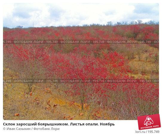 Склон заросший боярышником. Листья опали. Ноябрь, фото № 195749, снято 13 ноября 2004 г. (c) Иван Сазыкин / Фотобанк Лори
