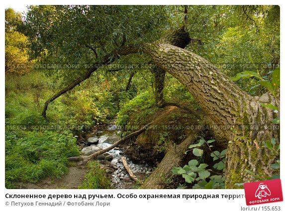 """Склоненное дерево над ручьем. Особо охраняемая природная территория """"Битцевский лес"""", фото № 155653, снято 4 сентября 2007 г. (c) Петухов Геннадий / Фотобанк Лори"""