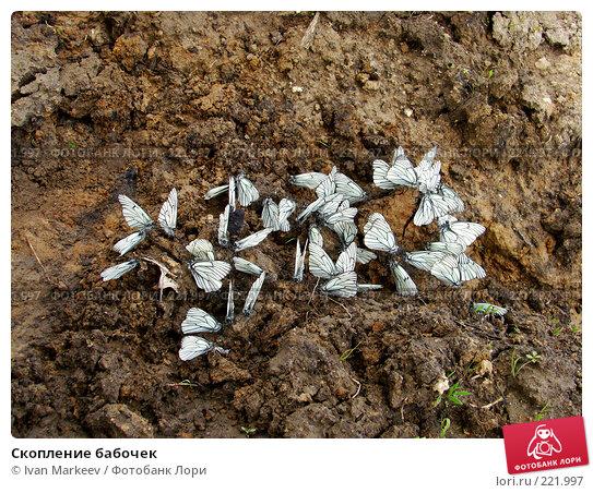 Скопление бабочек, фото № 221997, снято 16 июня 2007 г. (c) Василий Каргандюм / Фотобанк Лори