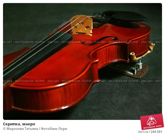 Скрипка, макро, фото № 244581, снято 3 апреля 2008 г. (c) Морозова Татьяна / Фотобанк Лори