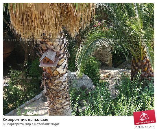 Скворечник на пальме, фото № 6213, снято 12 июля 2006 г. (c) Маргарита Лир / Фотобанк Лори
