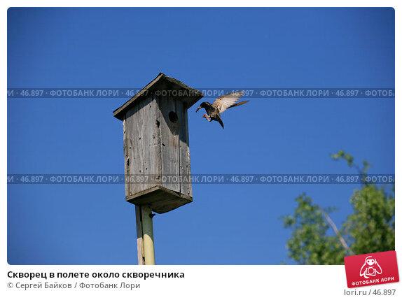 Скворец в полете около скворечника, фото № 46897, снято 20 мая 2007 г. (c) Сергей Байков / Фотобанк Лори