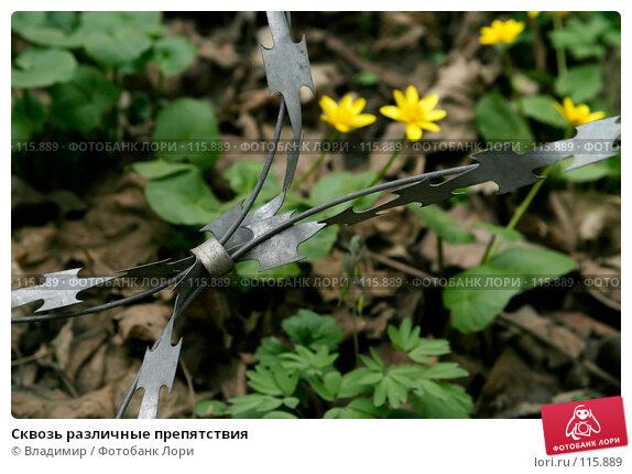 Сквозь различные препятствия, фото № 115889, снято 6 мая 2006 г. (c) Владимир / Фотобанк Лори