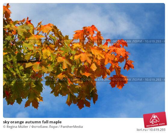 sky orange autumn fall maple. Стоковое фото, фотограф Regina Müller / PantherMedia / Фотобанк Лори