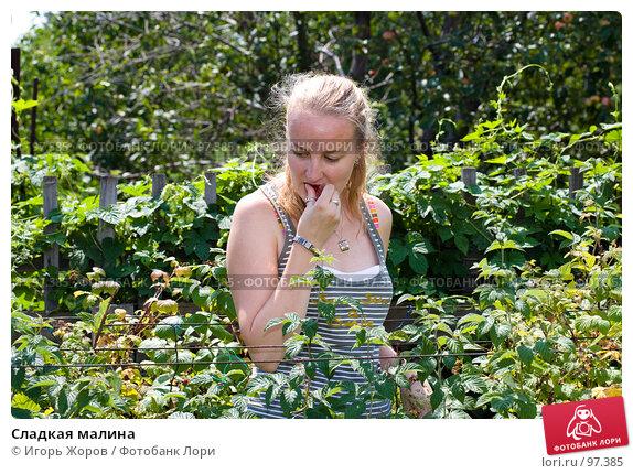 Купить «Сладкая малина», фото № 97385, снято 5 августа 2007 г. (c) Игорь Жоров / Фотобанк Лори