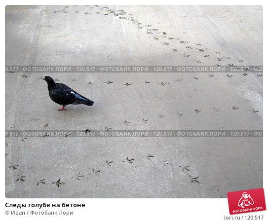 Следы голубя на бетоне, фото № 120517, снято 23 октября 2007 г. (c) Иван / Фотобанк Лори
