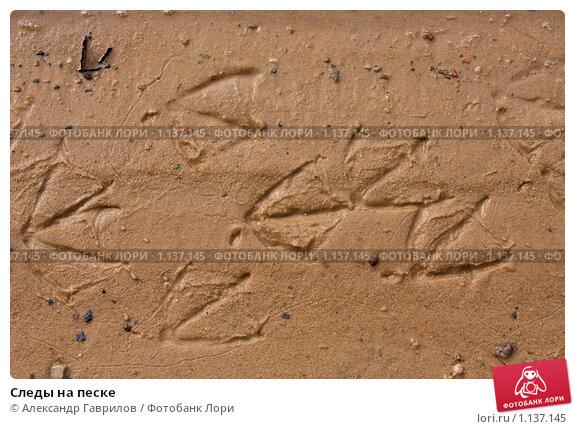 Купить «Следы на песке», фото № 1137145, снято 26 сентября 2009 г. (c) Александр Гаврилов / Фотобанк Лори