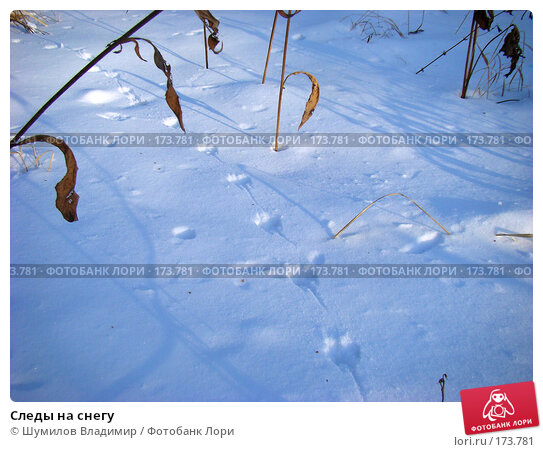 Купить «Следы на снегу», фото № 173781, снято 12 января 2008 г. (c) Шумилов Владимир / Фотобанк Лори