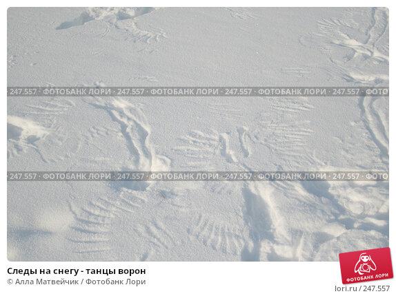 Следы на снегу - танцы ворон, фото № 247557, снято 10 февраля 2007 г. (c) Алла Матвейчик / Фотобанк Лори