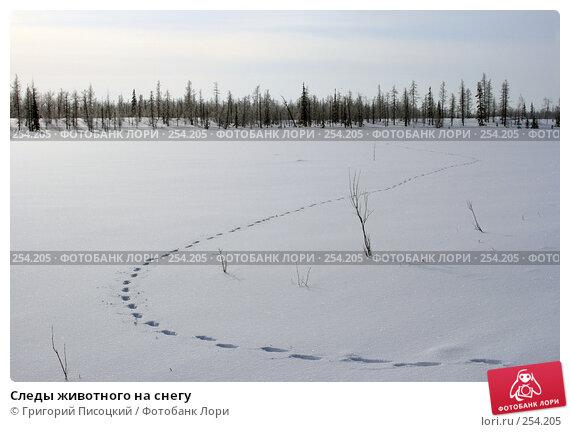 Купить «Следы животного на снегу», фото № 254205, снято 5 марта 2008 г. (c) Григорий Писоцкий / Фотобанк Лори
