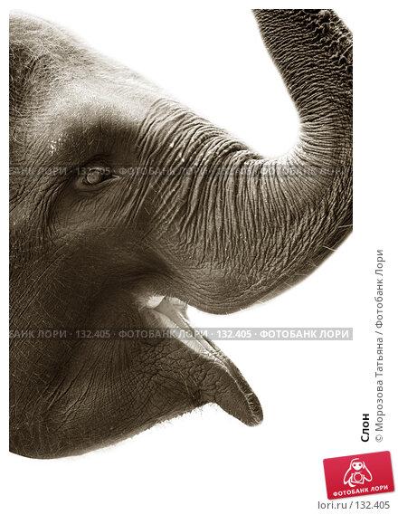 Слон, фото № 132405, снято 30 октября 2007 г. (c) Морозова Татьяна / Фотобанк Лори