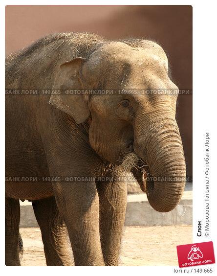 Слон, фото № 149665, снято 31 марта 2007 г. (c) Морозова Татьяна / Фотобанк Лори