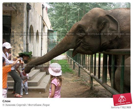 Слон, фото № 162969, снято 10 июля 2007 г. (c) Хижняк Сергей / Фотобанк Лори