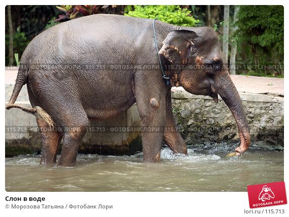 Слон в воде, фото № 115713, снято 30 октября 2007 г. (c) Морозова Татьяна / Фотобанк Лори