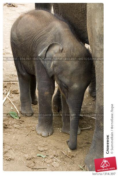 Слоненок, фото № 314397, снято 24 января 2017 г. (c) SummeRain / Фотобанк Лори