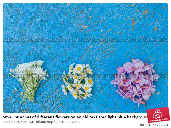 Купить «Small bunches of different flowers on an old textured light blue background flat lay top view», фото № 27791321, снято 22 февраля 2018 г. (c) PantherMedia / Фотобанк Лори