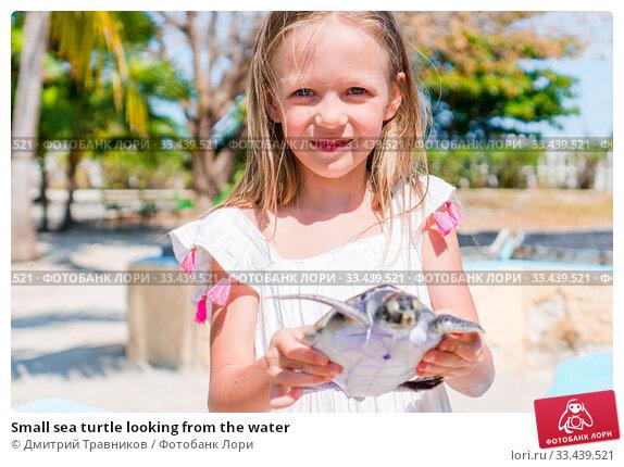 Купить «Small sea turtle looking from the water», фото № 33439521, снято 10 апреля 2017 г. (c) Дмитрий Травников / Фотобанк Лори