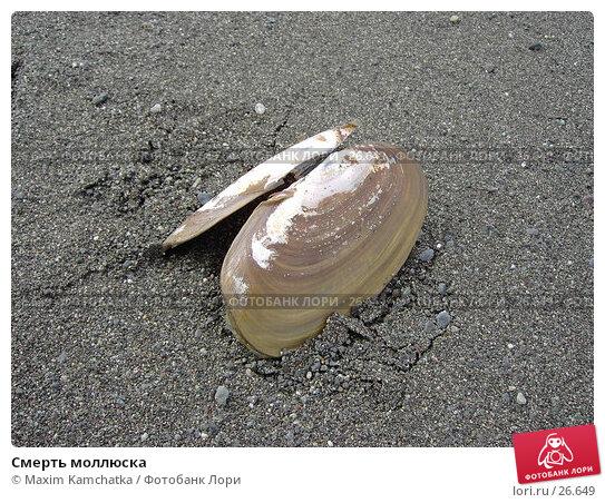 Смерть моллюска, фото № 26649, снято 24 марта 2007 г. (c) Maxim Kamchatka / Фотобанк Лори