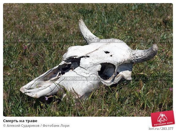Смерть на траве, фото № 283377, снято 3 мая 2008 г. (c) Алексей Судариков / Фотобанк Лори