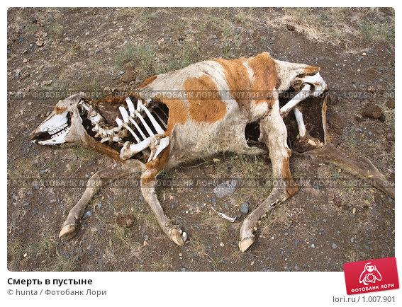 Данный сонник рассматривает лошадь как женскую сексуальность.