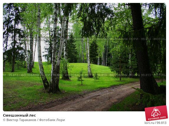 Смешанный лес, эксклюзивное фото № 99813, снято 31 мая 2006 г. (c) Виктор Тараканов / Фотобанк Лори
