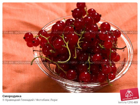 Купить «Смородина», фото № 210489, снято 21 июля 2004 г. (c) Кравецкий Геннадий / Фотобанк Лори