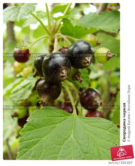 Смородина черная, фото № 333657, снято 13 июня 2008 г. (c) Андрей Багаев / Фотобанк Лори