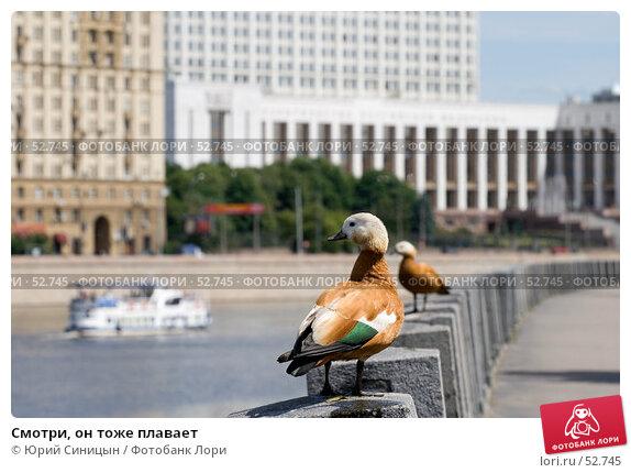 Купить «Смотри, он тоже плавает», фото № 52745, снято 11 июня 2007 г. (c) Юрий Синицын / Фотобанк Лори