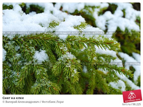 Снег на елке, фото № 98225, снято 10 октября 2007 г. (c) Валерий Александрович / Фотобанк Лори