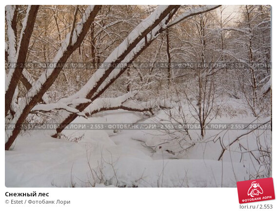 Снежный лес, фото № 2553, снято 24 мая 2017 г. (c) Estet / Фотобанк Лори