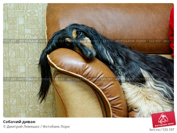 Собачий диван, фото № 133197, снято 14 ноября 2007 г. (c) Дмитрий Лемешко / Фотобанк Лори