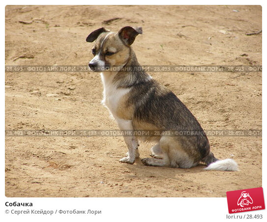 Купить «Собачка», фото № 28493, снято 29 мая 2006 г. (c) Сергей Ксейдор / Фотобанк Лори