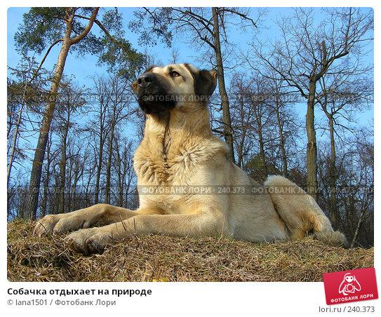 Собачка отдыхает на природе, эксклюзивное фото № 240373, снято 26 марта 2008 г. (c) lana1501 / Фотобанк Лори