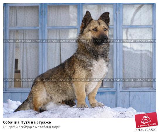 Купить «Собачка Путя на страже», фото № 28509, снято 28 марта 2007 г. (c) Сергей Ксейдор / Фотобанк Лори