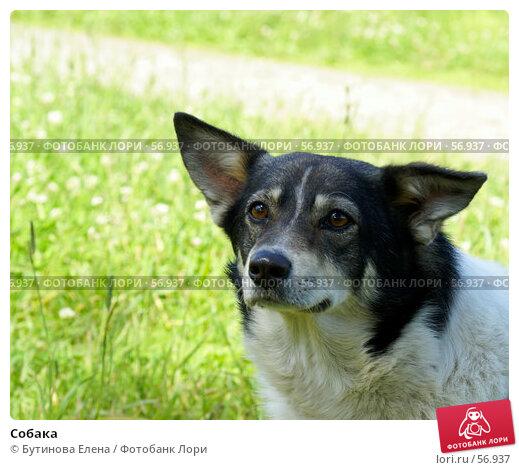 Собака, фото № 56937, снято 1 июля 2007 г. (c) Бутинова Елена / Фотобанк Лори
