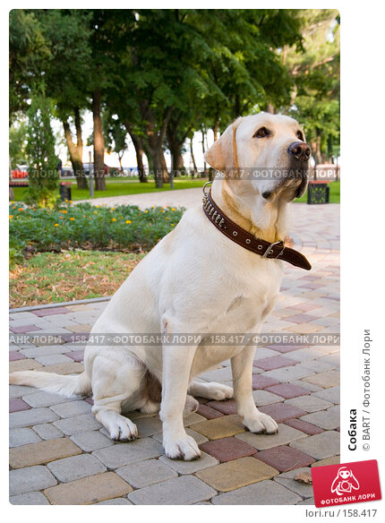 Собака, фото № 158417, снято 12 июня 2007 г. (c) BART / Фотобанк Лори