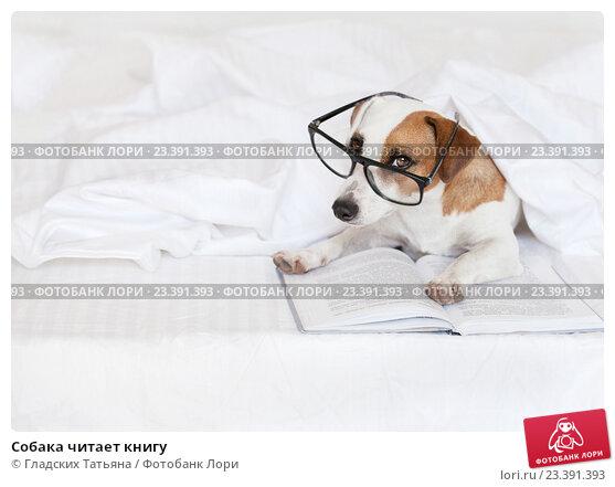 Собака читает книгу, фото № 23391393, снято 2 июля 2016 г. (c) Гладских Татьяна / Фотобанк Лори