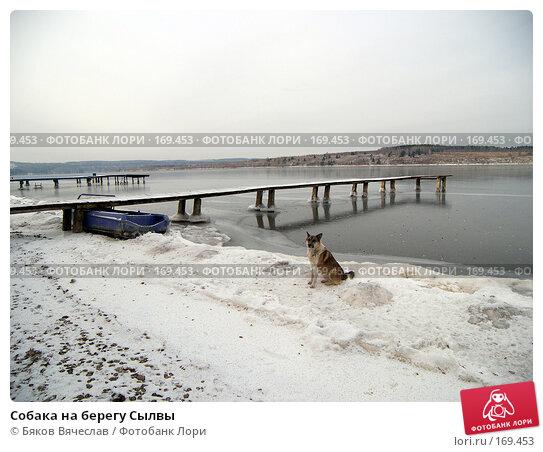Купить «Собака на берегу Сылвы», фото № 169453, снято 10 ноября 2007 г. (c) Бяков Вячеслав / Фотобанк Лори