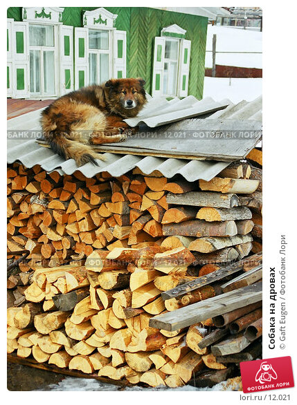 Собака на дровах, фото № 12021, снято 8 декабря 2016 г. (c) Gaft Eugen / Фотобанк Лори