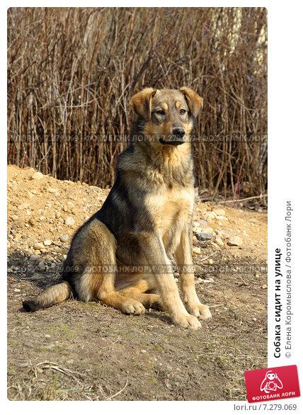 Купить «Собака сидит на улице», эксклюзивное фото № 7279069, снято 28 марта 2015 г. (c) Елена Коромыслова / Фотобанк Лори