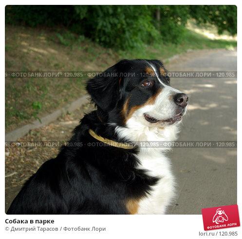 Собака в парке, фото № 120985, снято 24 июня 2007 г. (c) Дмитрий Тарасов / Фотобанк Лори
