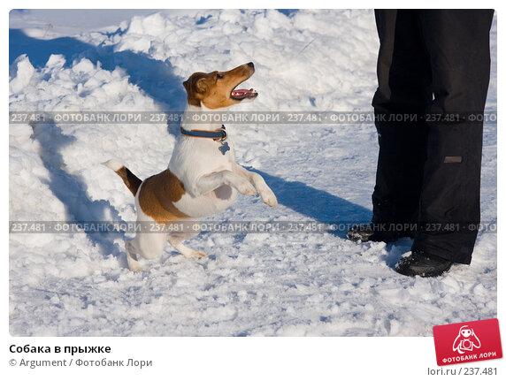 Собака в прыжке, фото № 237481, снято 29 марта 2008 г. (c) Argument / Фотобанк Лори